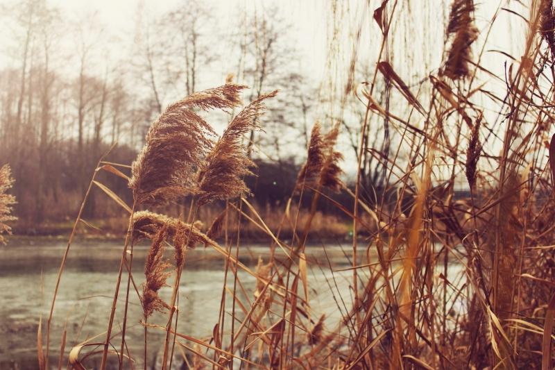Ruskovský rybník
